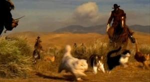 cat-herding1