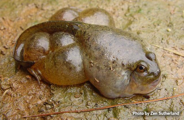Endocrine Frog 2